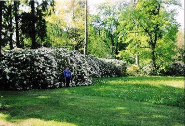 lázeňský park: kvetoucí rododendrony