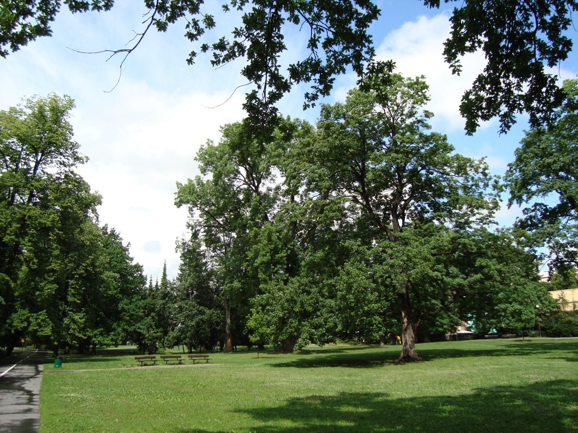 смотря чеховский сад фото серябкина впервые
