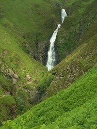 Grey Mare´s tail