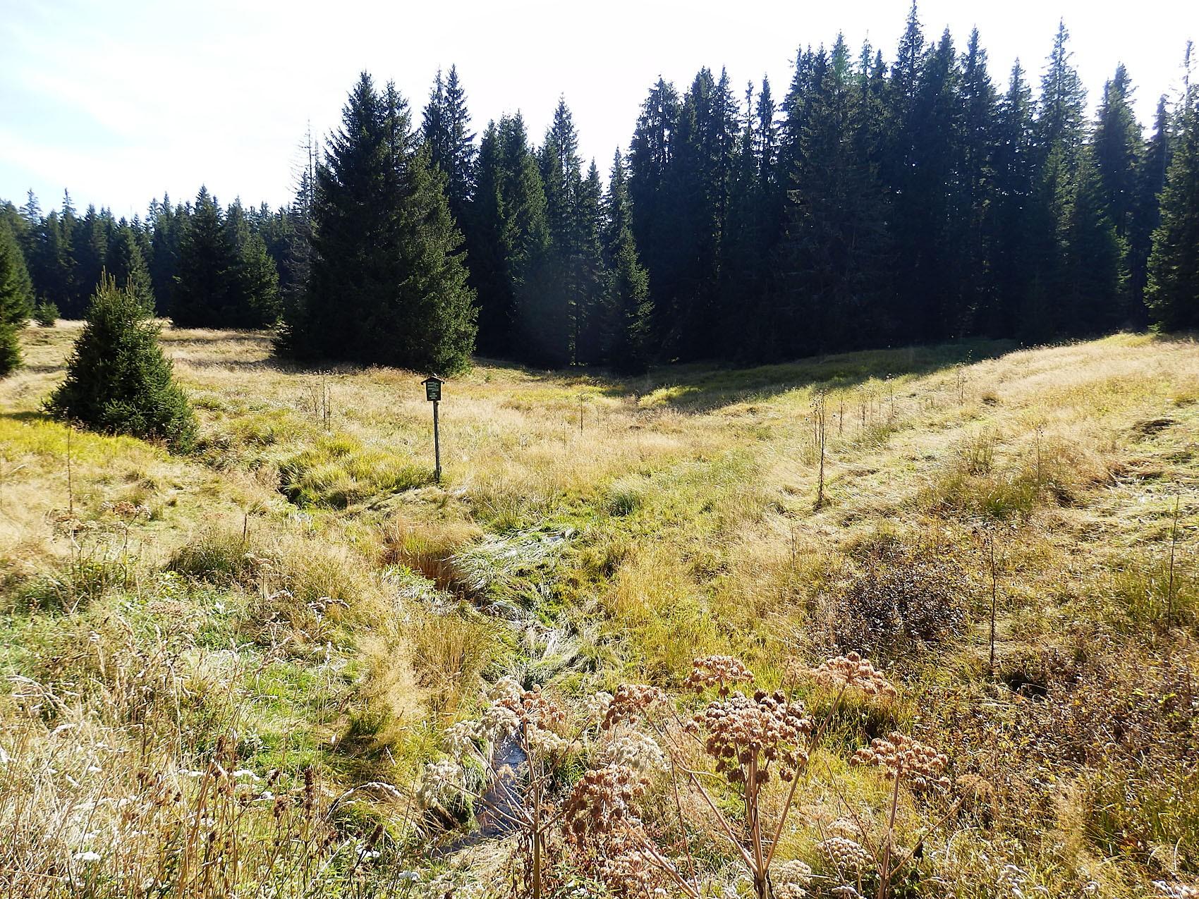 Výsledek obrázku pro šumavské slatě v okolí zlaté studně