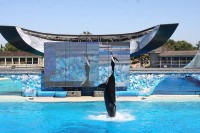 Sea World, San Diego